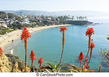 Flowers over beach cove - Bright orange Aloe Vera cactus...