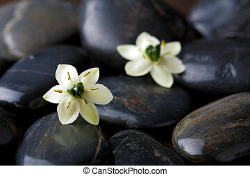 flowers over spa stones