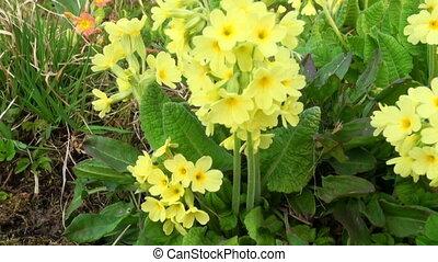 flowers., panorama., jaune