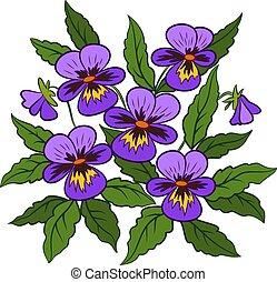 Flowers Pansies Viola