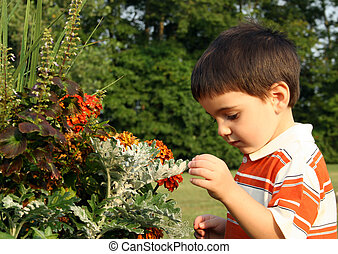 Flowers - Toddler boy looking at flowers.