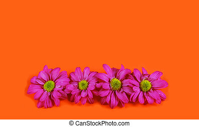 Flowers - Pink flowers on an orange background.