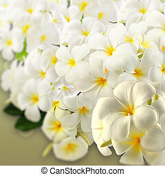 flowers., plumeria, frangipani, エステ