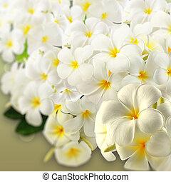flowers., plumeria, frangipani, spa