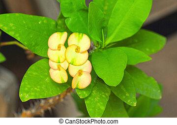 Flowers Poi Sian - yellow orange flowers.