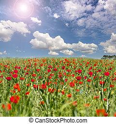 flowers poppy meadow sky landscape