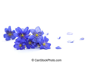 flowers., pramen