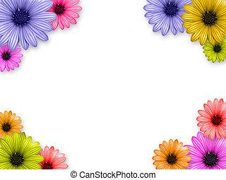 flower\'s, rahmen