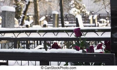 flowers roses lie on the grave in cemetery or graveyard in...