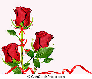 flowers roses - Red roses on white background