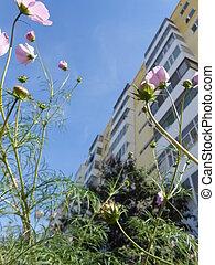 Flowers seen from below