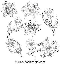 Flowers, set, outline - Set of flowers: tulip, narcissus,...
