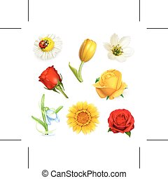 Flowers  - Set with flowers, isolated on white background
