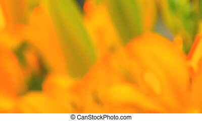 flowers, Canon XH A1, Full video, 1080p, 25fps, progressive...