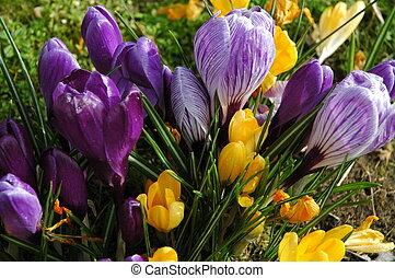Flowers - garden flowers