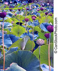 Flowers - Green Purple Flowers