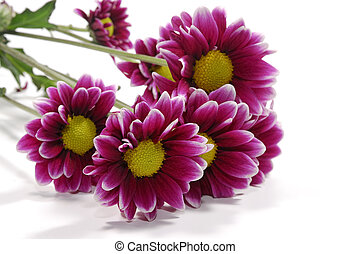 Flowers - A Photo of Vivid Flowers