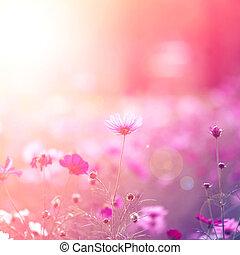 flowers - Cosmos flowers