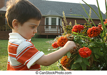 Flowers - Toddler boy examining pot of flowers.