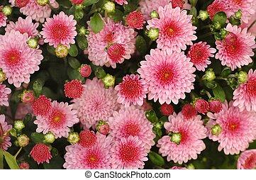 Flowers - Pink flowers