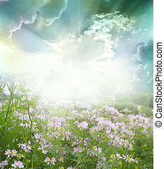 flowers - Spring flowers background