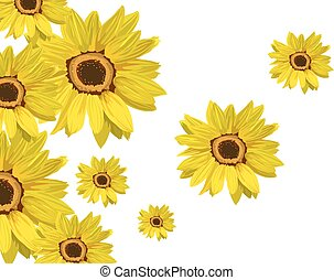 Flowers sunflower isolated on white
