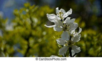 Flowers sway in wind.Bees flying in flowers.
