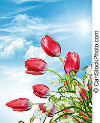flowers tulips against the blue sky with clouds. snowdrop