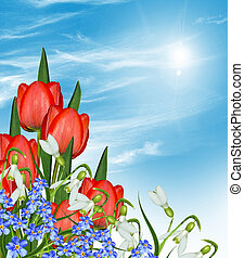 flowers tulips against the blue sky with clouds