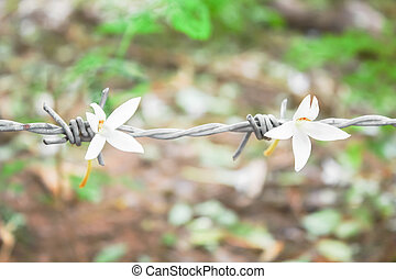 Flowers with barbed wire