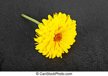 Flowers with leaves Calendula against a background of black stone