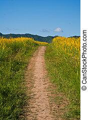 Flowers yellow corridor