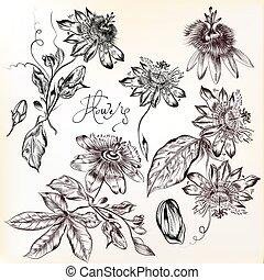 flowers.eps, gyűjtés, kéz, gyakorlatias, vektor, húzott
