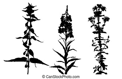 flowerses silhouette on white background, vector illustration