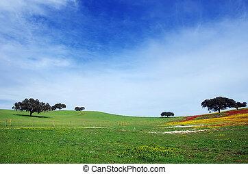 flowery field in alentejo, south of Portugal
