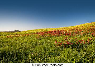 Flowery field - Beautiful flowery field on the spring season