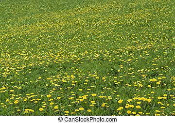 flowery grassland
