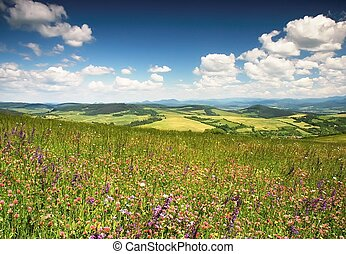 Flowery meadow - Blossoming summer meadow with mountains in...