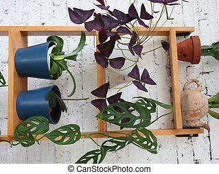 flowery plants in pots on wooden shelves, against a backdrop of white walls