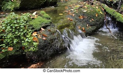 Flowing stream in the autumn forest - Peaceful flowing...