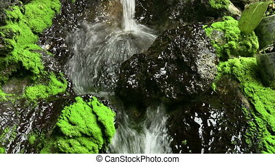 Flowing water and mossy rock