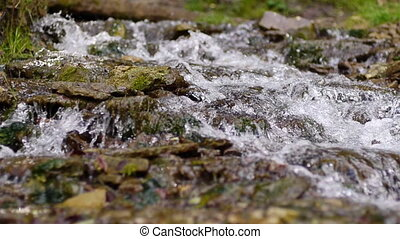 Flowing water in forest stream