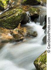 Flowing water in the forest