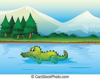 fluß, alligator