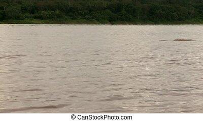 Fluß,  river),  (amazon, delphine