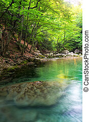 fluß, tief, in, berg, an, summer., wasser, bach, an, forest., zusammensetzung, von, natur