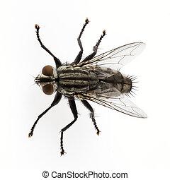 flue, flesh
