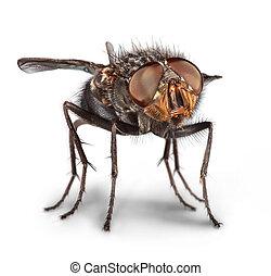 flue, rykke sammen