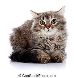 Fluffy beautiful scared cat