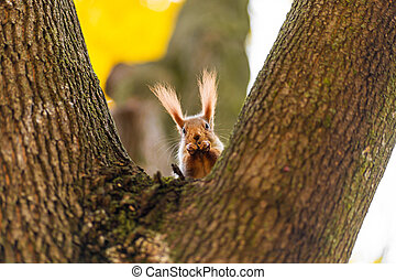 Fluffy beautiful squirrel on a tree trunk among yellow leaves in autumn in a city park